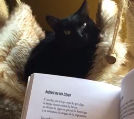 Publicar-un-libro-editar-Madrid-Barcelona-cataluña-españa-català-Andalucia-coedicion-autoedicion-cine-literatura-pala-soneto-poesia-poema-pala-pasacintas